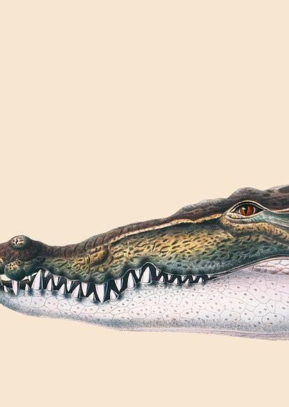 Poster Krokodil