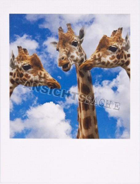 """Polacard """"Giraffen"""""""