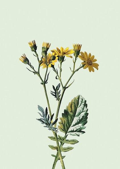 Poster gelbe Blumen