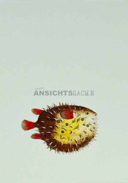 Postkarte Kugelfisch